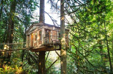 У Києві відкриється готель на дереві